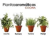 PACK PLANTAS AROMÁTICAS COCINA 2. 1 MENTA, 1 TOMILLO, 1...