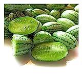 Premier Semillas directa ORN11 Cucamelonen mejores semillas...
