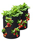 Tvird Bolsa para Plantas, 10Gallon Strawberry Plant Grow...