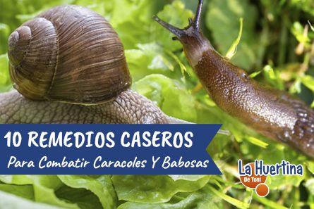 10 Maneras de Combatir Los Caracoles Y Babosas En La Huerta