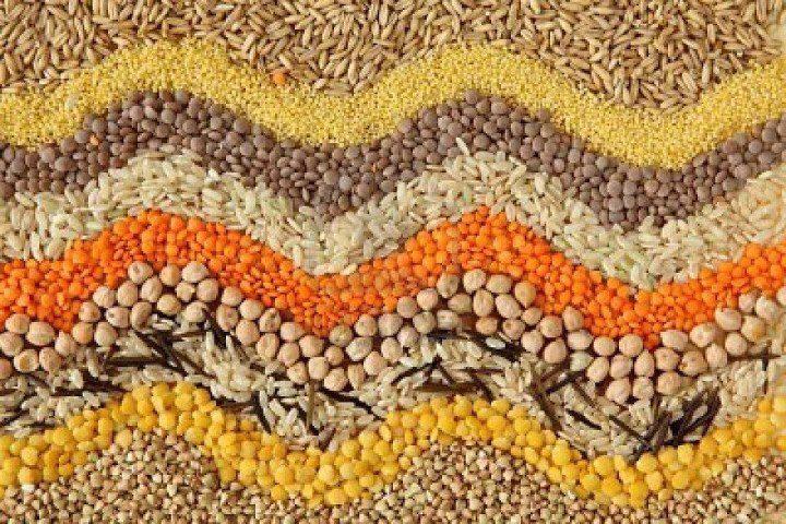 semilla ecologica