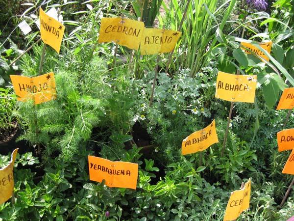 Como hacer semillero de aromaticas la huertina de toni - Plantas aromaticas jardin ...