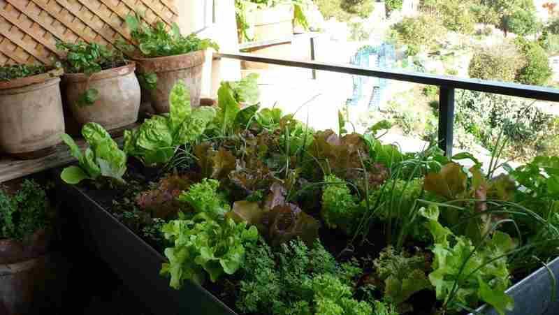 Plantar en huertos urbanos con poca luz la huertina de toni - Huerto en la terraza ...