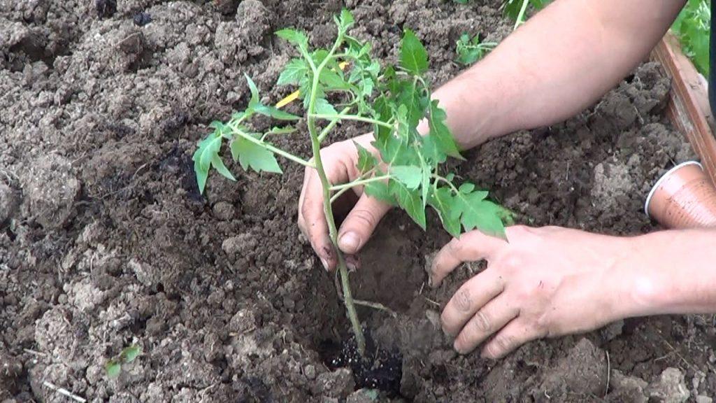 Como hacer una huerta cuidar de tus plantas es for Como cultivar plantas ornamentales