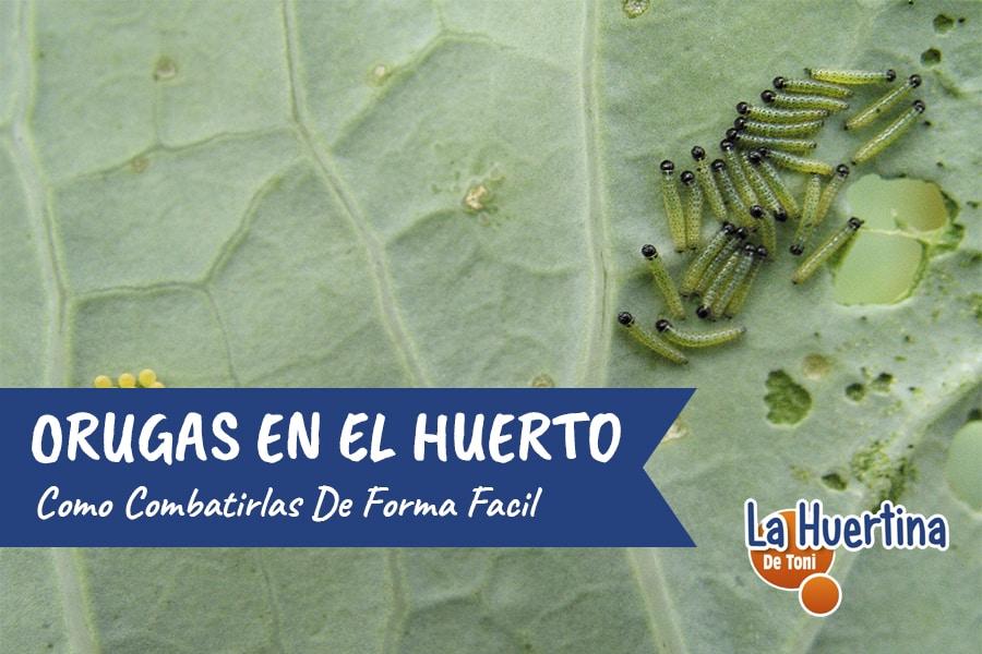 Conoce Y Combate Las Orugas En El Huerto Y Plantas