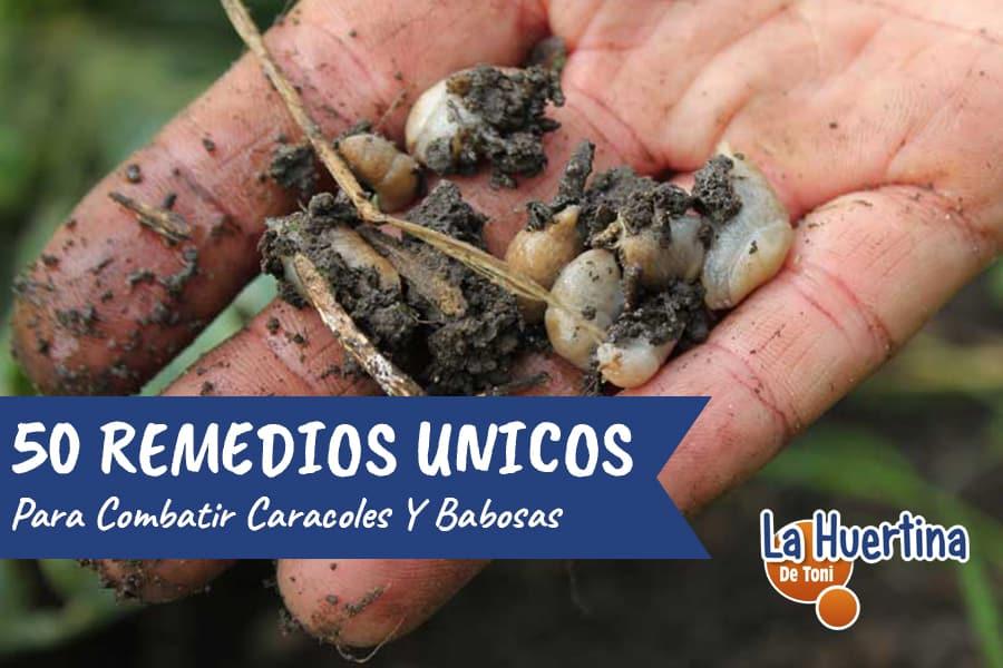50 métodos ecológicos para combatir caracoles y babosas