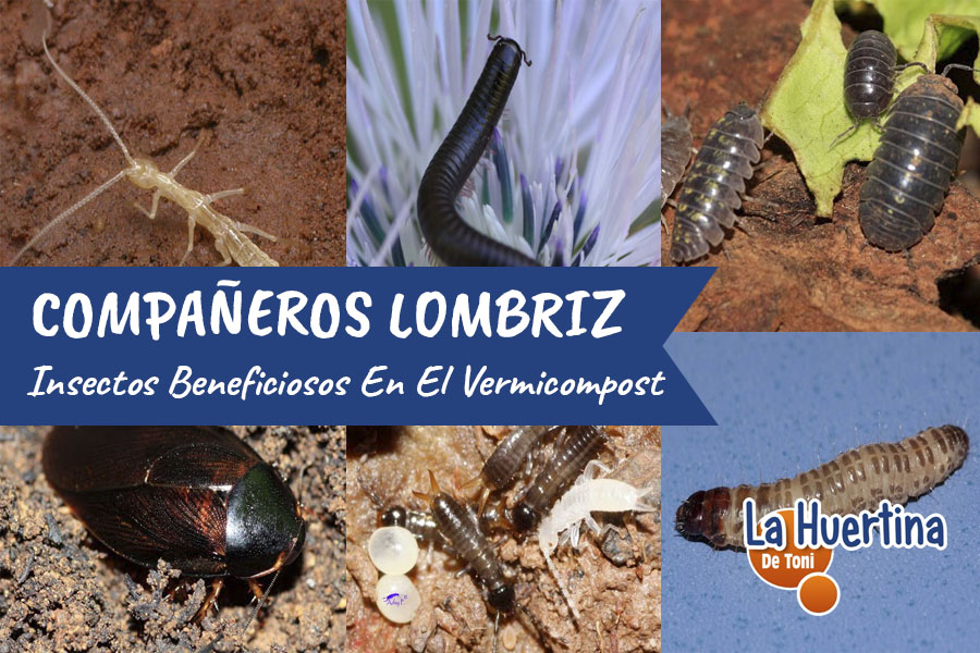 Insectos Beneficiosos En Nuestro Vermicompost
