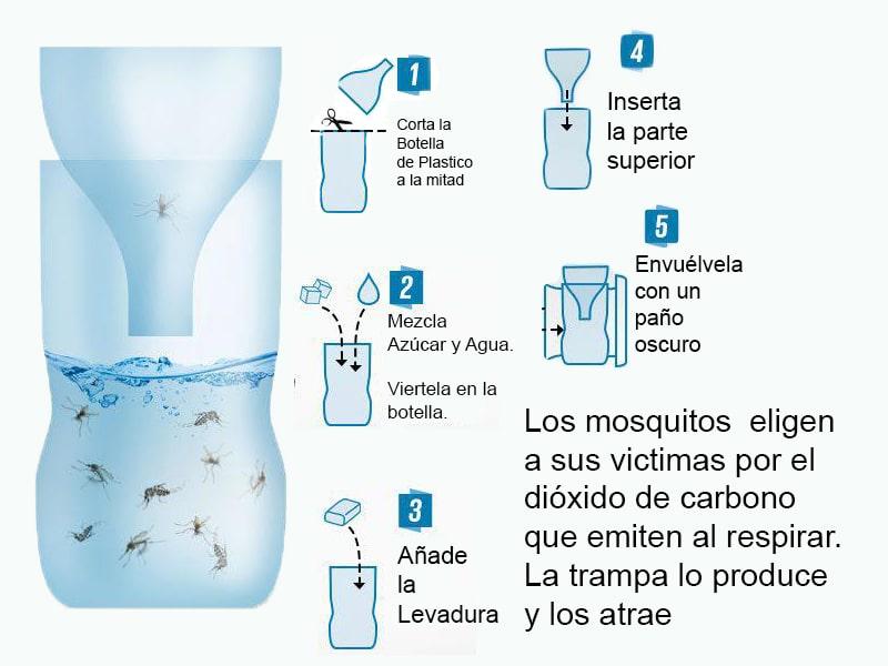 Trampas caseras para insectos molestos la huertina de toni - Trampa casera para moscas ...