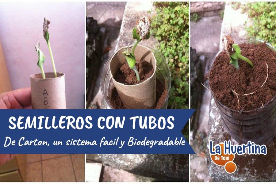 Semilleros Caseros Con Rollos De Cartón