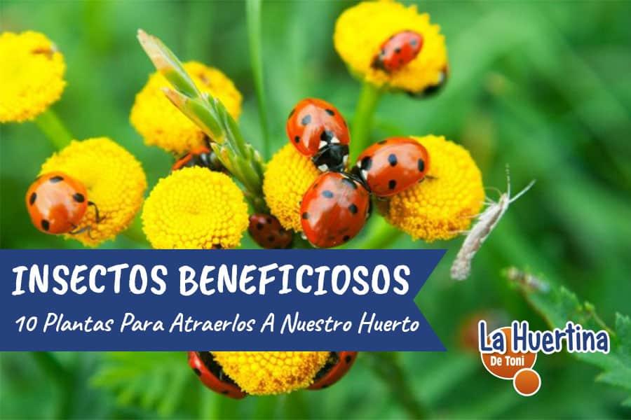 10 Plantas Que Atraen Insectos Beneficiosos Para El Huerto