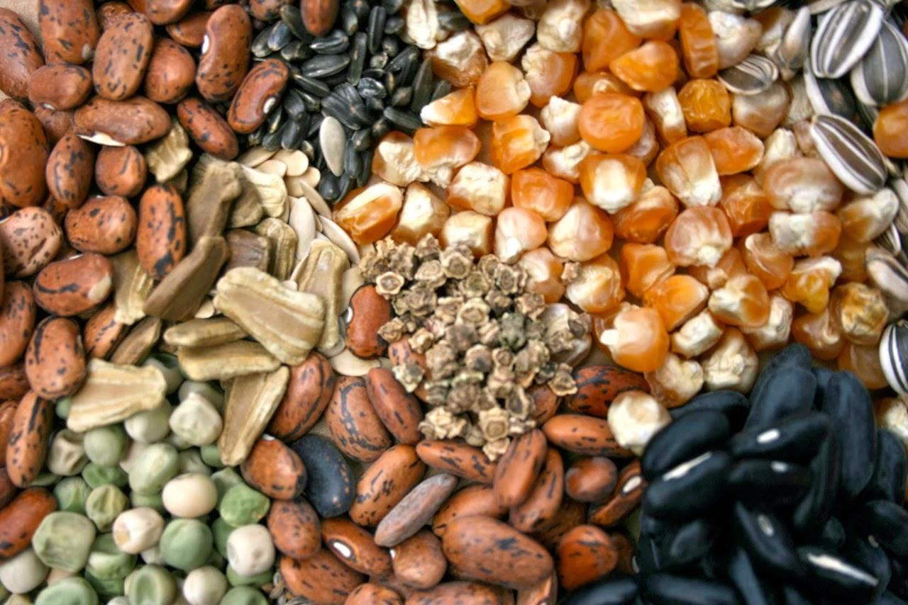 semillas tradicionales