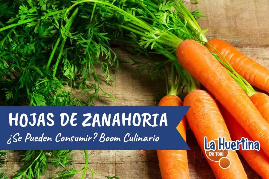 Se Pueden Consumir Las Hojas De Zanahoria La Huertina De Toni ¿que vitaminas tiene la zanahoria y para que sirven? pueden consumir las hojas de zanahoria