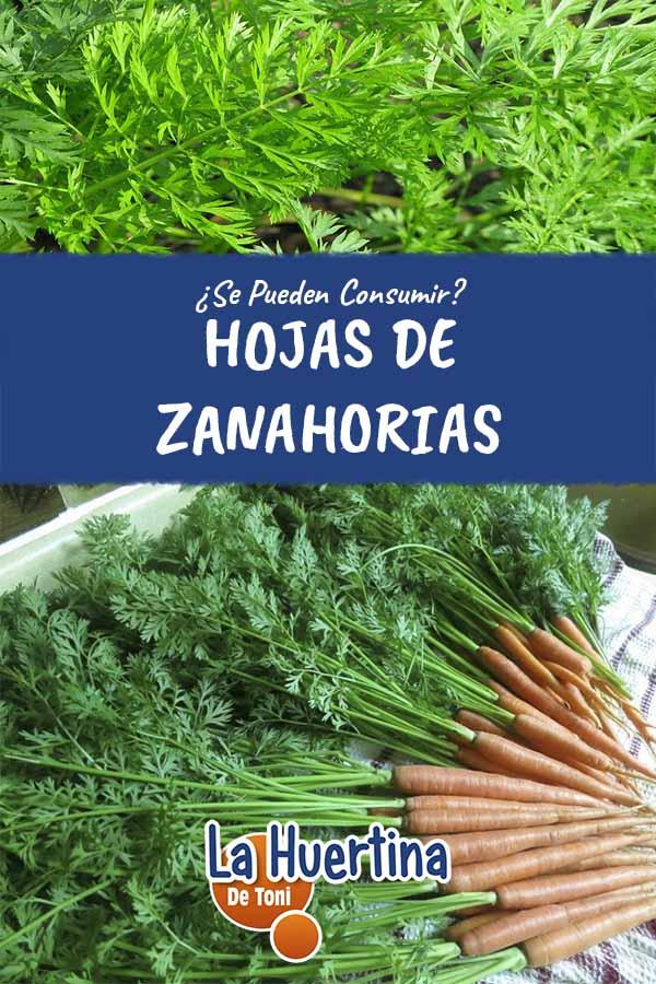 Se Pueden Consumir Las Hojas De Zanahoria La Huertina De Toni Luego procesar hasta formar un puré y dejar enfriar. pueden consumir las hojas de zanahoria