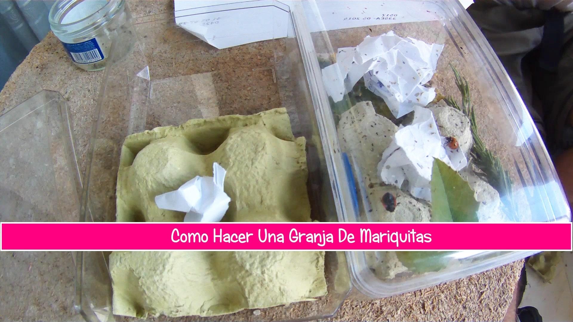 Como hacer una granja de mariquitas en casa la huertina - Como hacer una claraboya ...