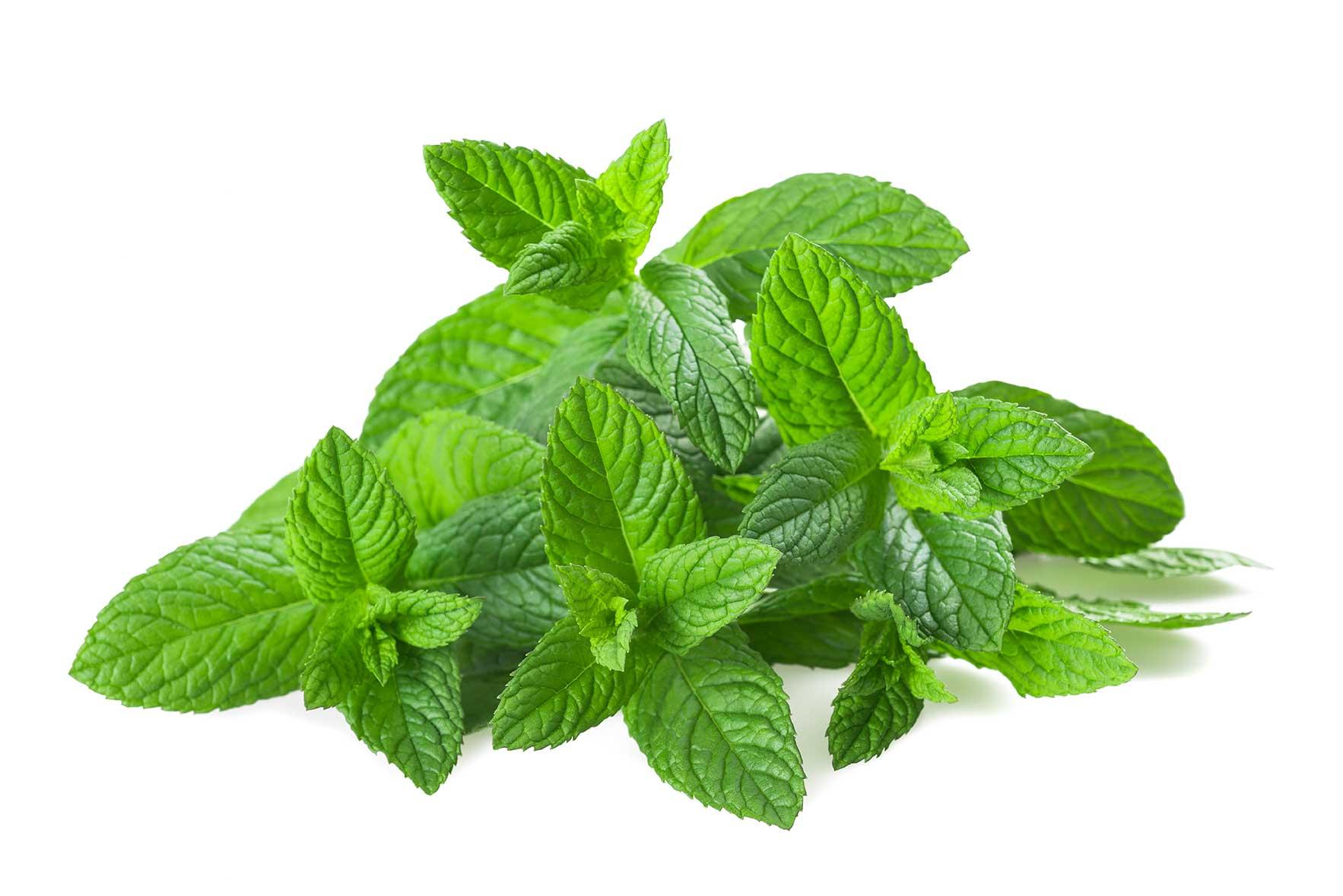 Baños Plantas Medicinales Para El Asma: de 5 plantas medicinales más comúnes – La Huertina De Toni