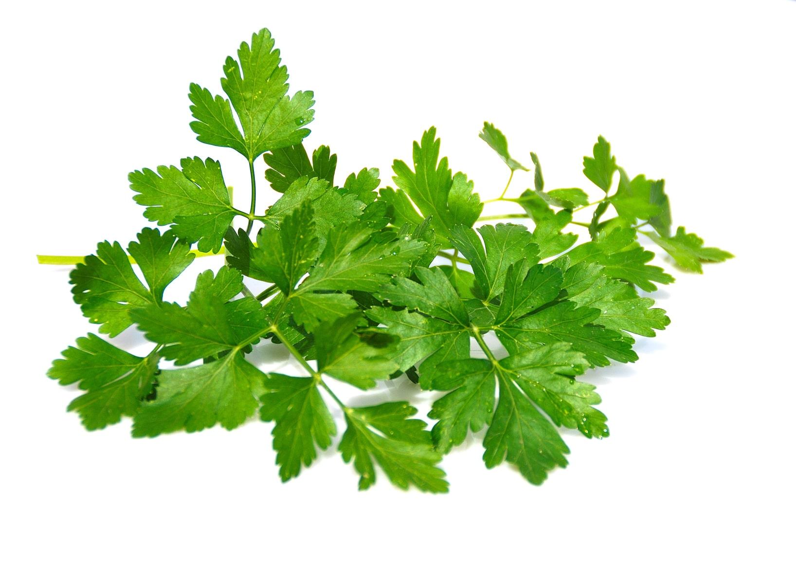 Propiedades de 5 plantas medicinales m s com nes la for Planta decorativa con propiedades medicinales