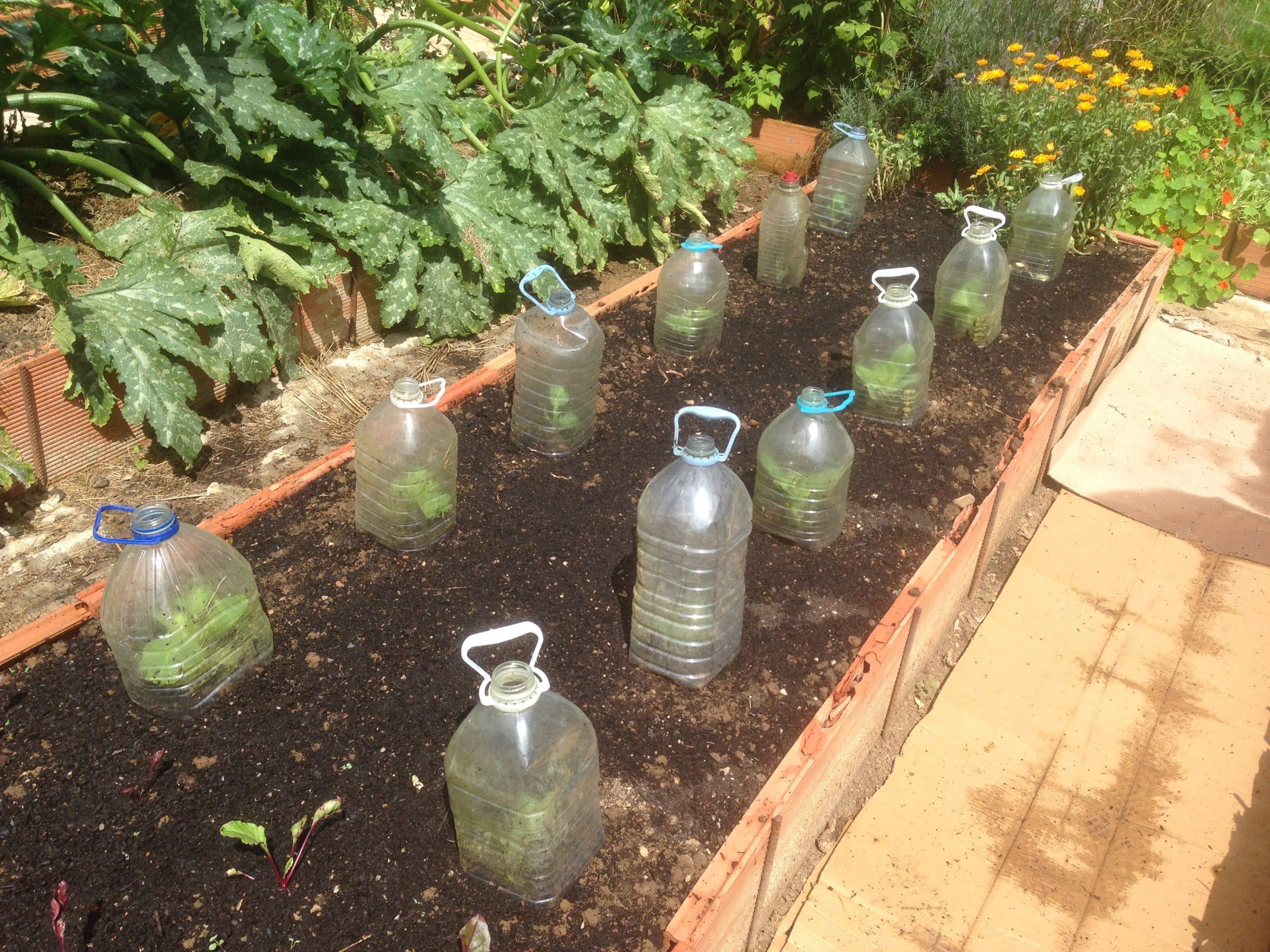 El huerto en octubre oto o la huertina de toni for Plantas beneficiosas para el huerto