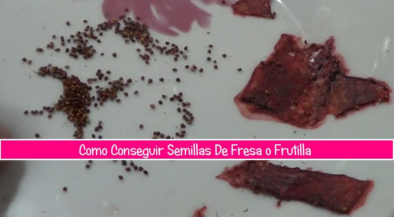fresas semillas