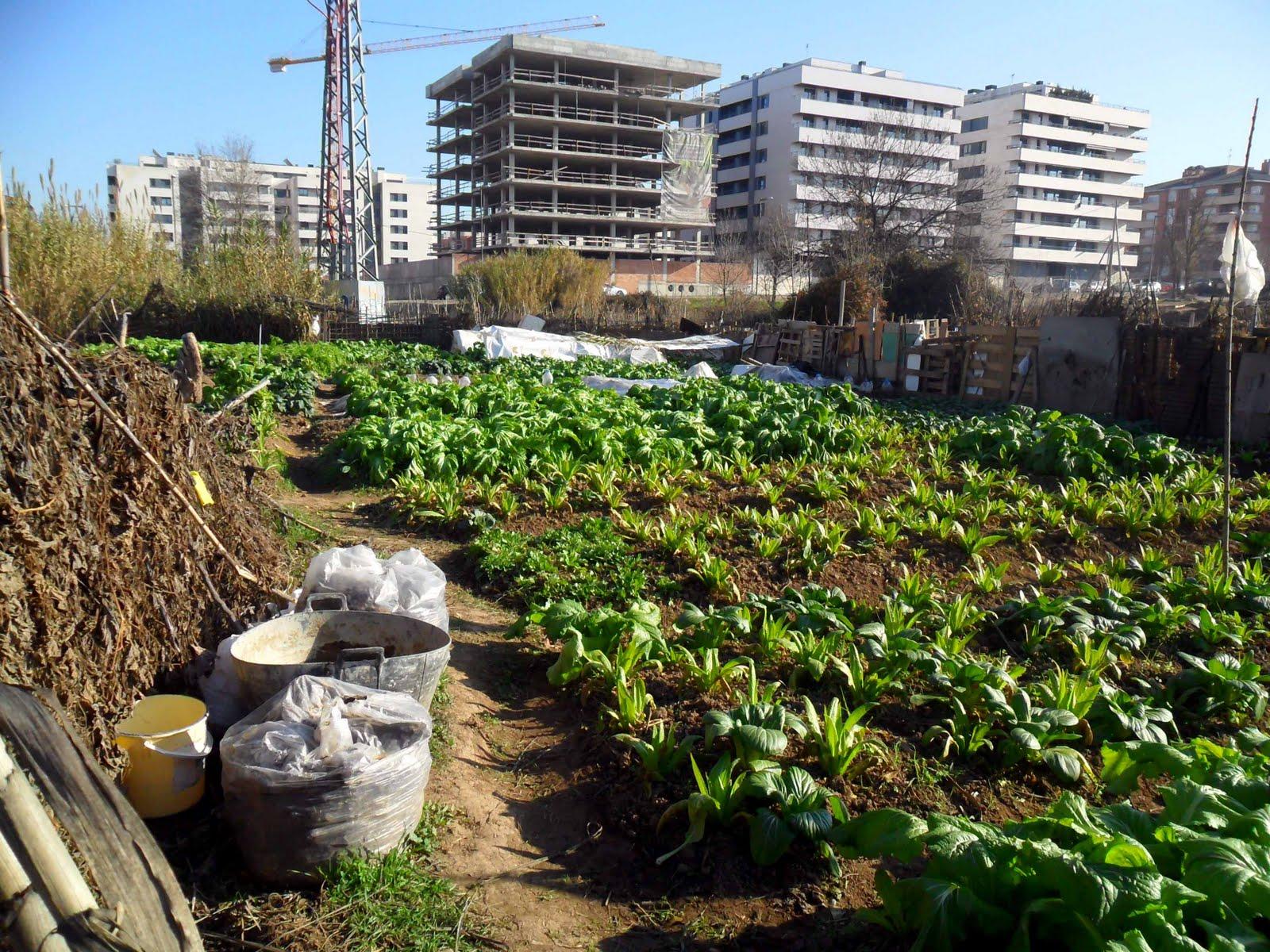 7 tips para tener una huerta urbana for Huerto urbano que plantar