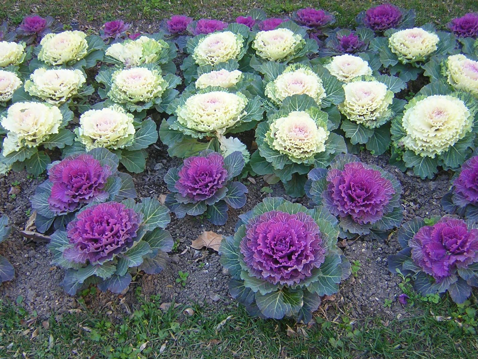 20 plantas resistentes al fr o - Plantas exterior resistentes ...