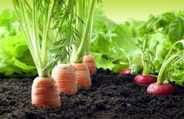 Alelopatía o cómo las plantas se pueden ayudar en el huerto