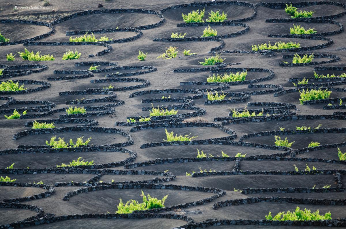 Protege tus plantas, recopilación de cortavientos