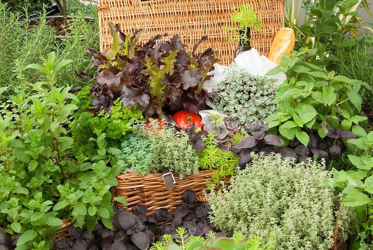 5 arom ticas imprescindibles en nuestro huerto ecologico for Hierbas aromaticas y medicinales