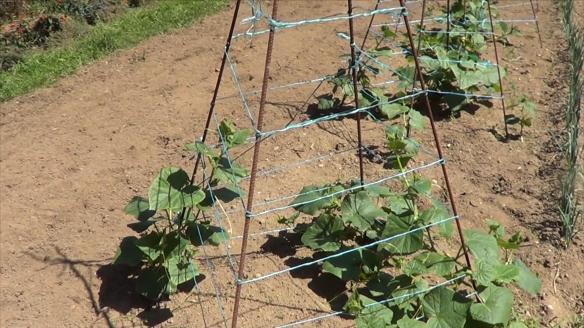 Como entutorar las plantas en pir mide o tipi for Donde venden plantas