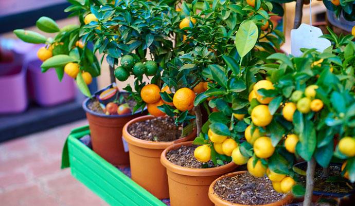 6 frutales que podemos germinar en casa facilmente - Como plantar arboles frutales ...
