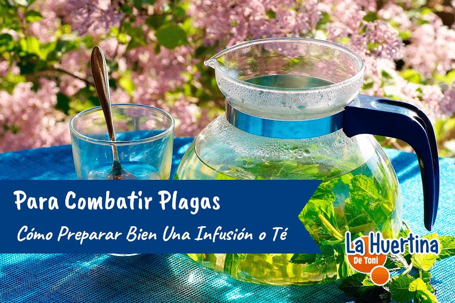 Como Preparar Bien Una Infusión o Te Para Combatir Plagas