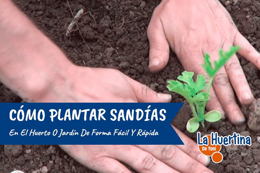 Como Plantar Sandias En El Huerto