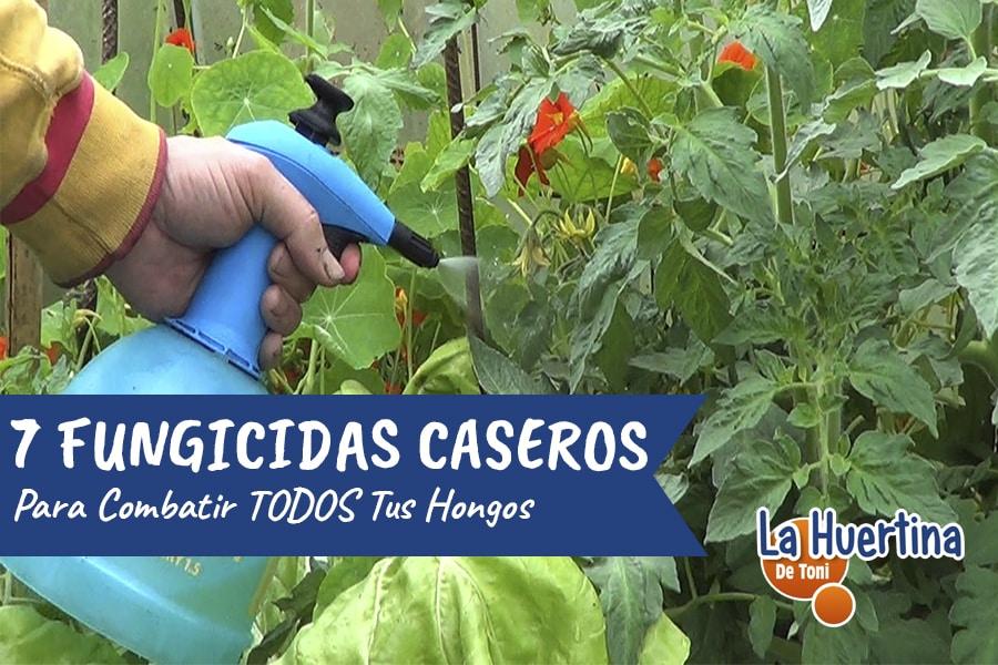 7 Fungicidas Caseros Para Combatir Hongos En Tu Huerto