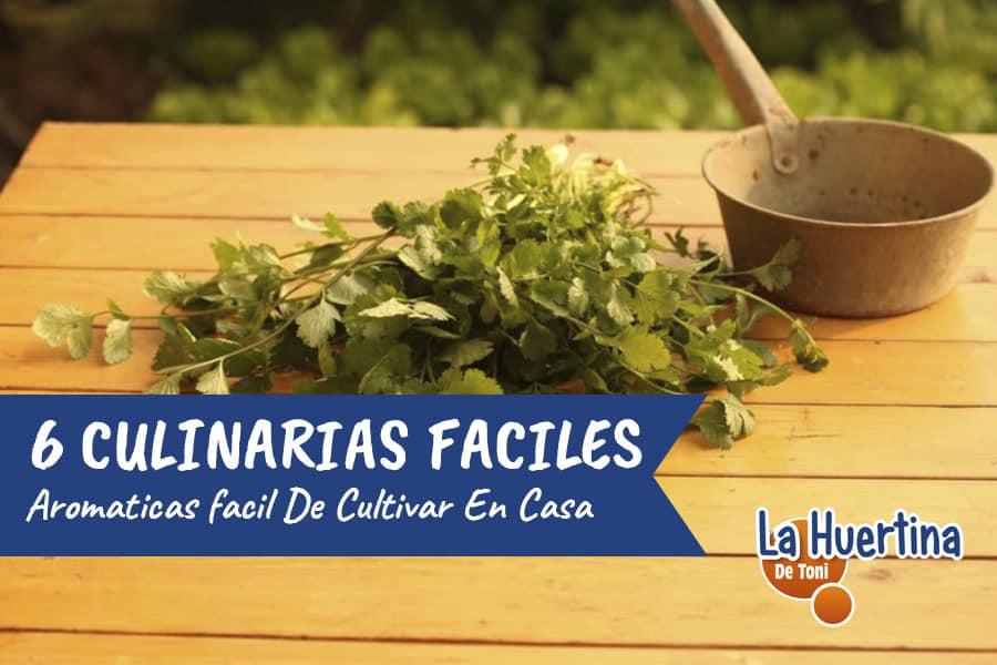 6 Plantas Culinarias fáciles de Cultivar a partir de Semilla