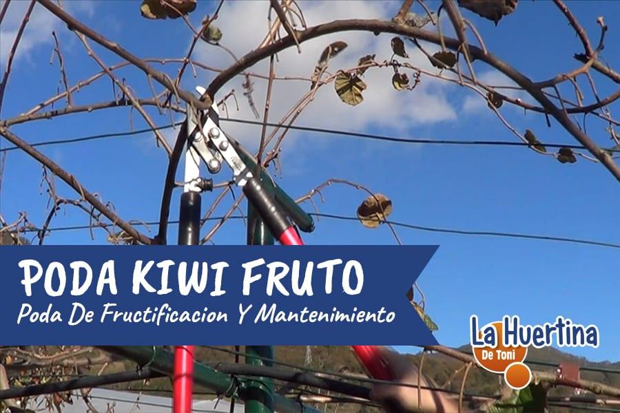 Como Y Cuando Podar El Kiwi – Poda De Fructificación