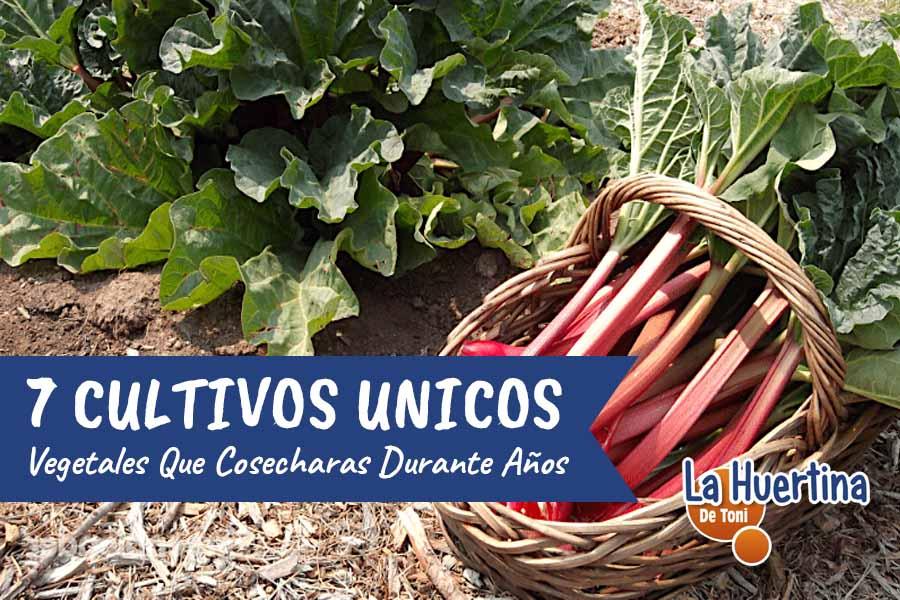 7 Vegetales Que Solo Plantaras Una Vez Y Cosecharas Años