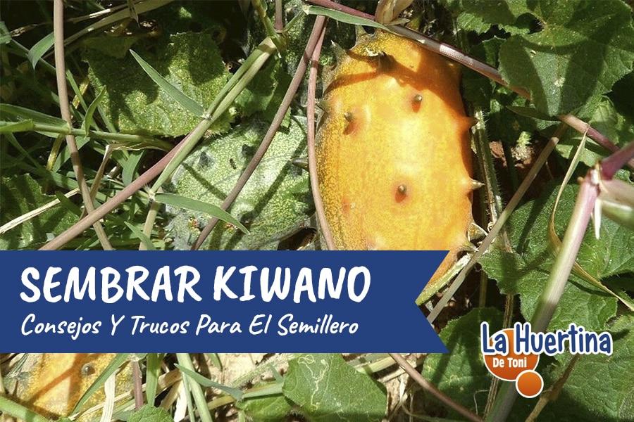 Como Y Cuando Sembrar Kiwano – Consejos Y Trucos – El Semillero