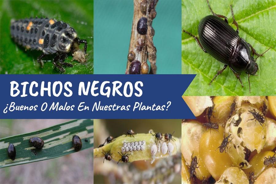 Bichos Negros en mis Plantas ¿Qué Son y Cómo eliminarlos?