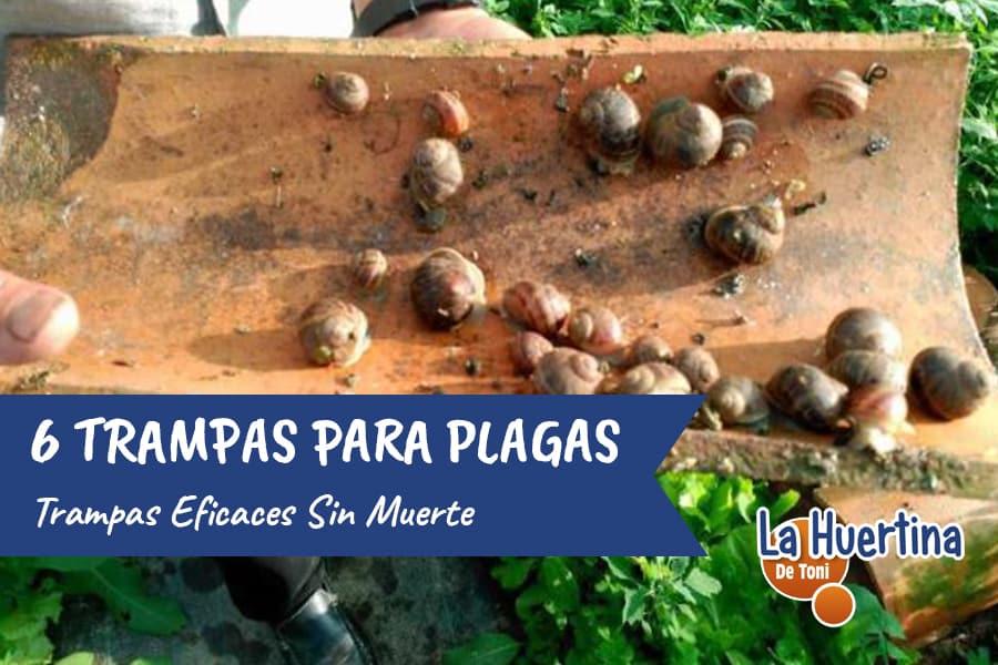 6 Trampas para Atrapar sin Matar Plagas de la Huerta