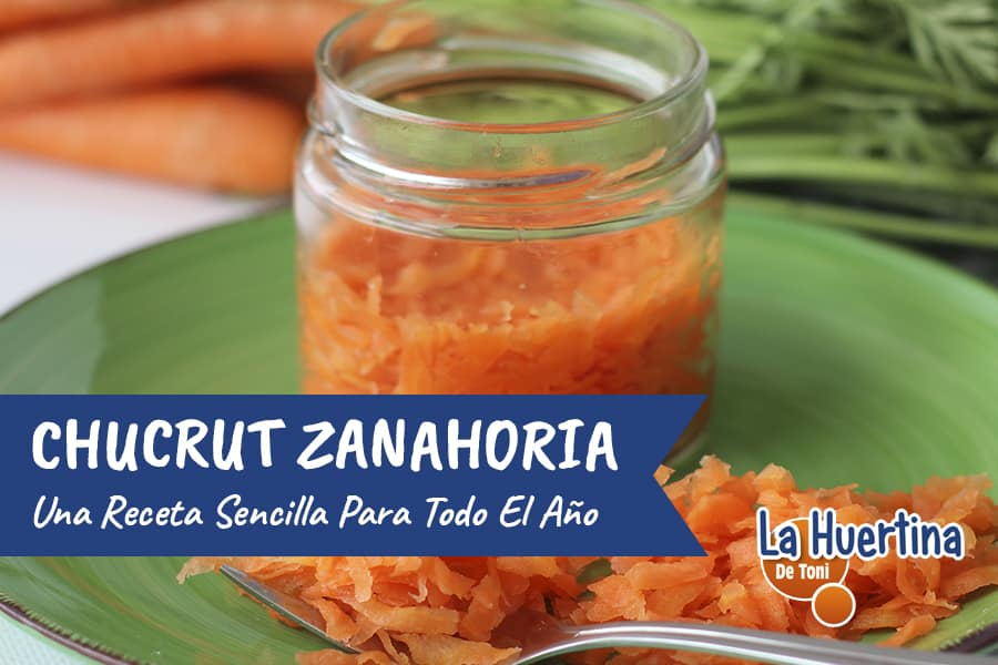 Cómo preparar Chucrut de Zanahoria, receta fácil