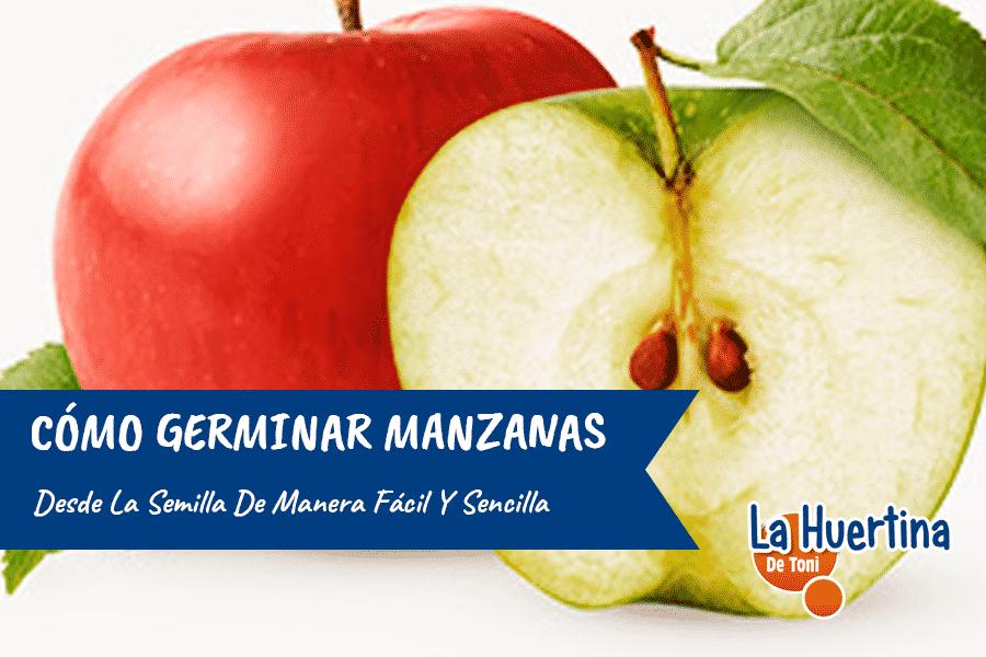 Cómo germinar semillas de manzana de manera fácil y rápida.