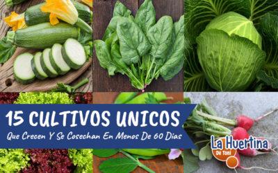 15 Hortalizas Que Crecen Y Producen En Menos De 60 Días