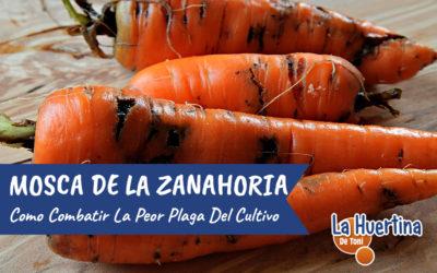 Como Combatir La Mosca De La Zanahoria