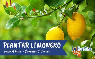 Como Plantar Un Limonero En El Huerto O Jardín – Consejos Y Trucos