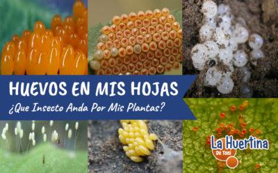 Huevos En Las Hojas De Mis Plantas ¿De Que Son?