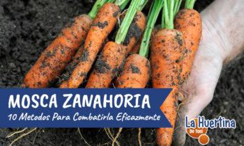 10 Formas de Controlar La Mosca De La Zanahoria