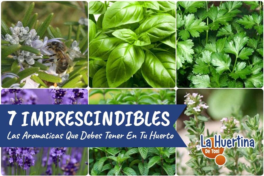 7 Aromáticas IMPRESCINDIBLES En El Huerto Urbano O Jardín