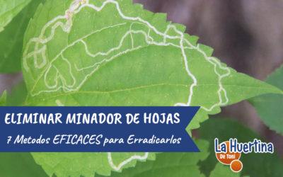 7 Métodos Eficaces Para Eliminar El Minador De Las Hojas