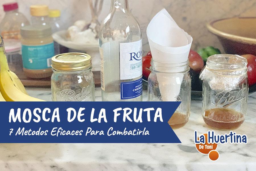 7 Métodos EFICACES Para Combatir La Mosca De La Fruta