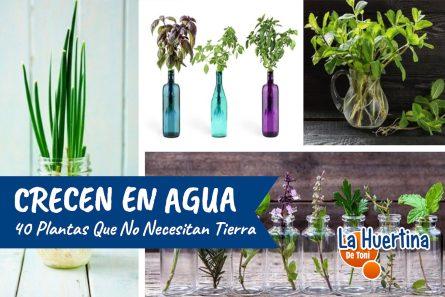 No Necesitas Tierra Para Estas Plantas. 40 Plantas Que Puedes Cultivar En Agua