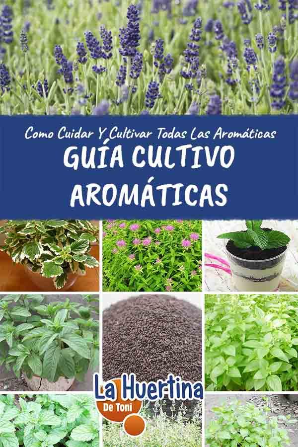 guia de cultivo de aromaticas